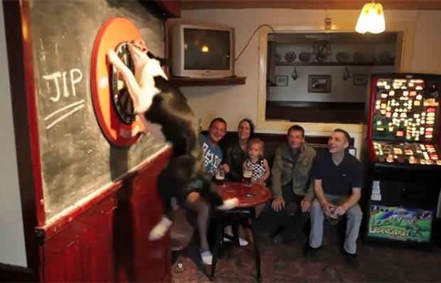 """Mascote de um pub em Rochdale, no Reino Unido, um cão da raça Border Collie ficou famoso entre os clientes por buscar os dardos após eles serem lançados. Apesar de o alvo ficar a cerca de dois metros do chão, o cão chamado """"Jip"""" salta e pega o dardo. (Foto: Reprodução)"""