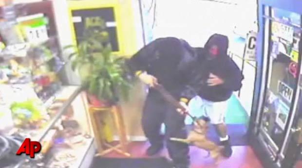 Em julho, um cão da raça Chihuahua atacou dois ladrões que tentavam roubar uma loja em Altadena, no estado da Califórnia (EUA). (Foto: AP)