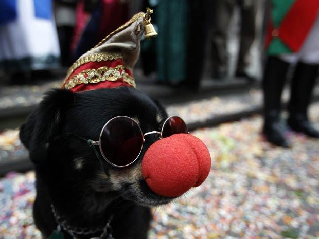 Cão ganha nariz de palhaço nesta sexta-feira (11) na celebração do carnaval de Colônia, na Alemanha (Foto: Reuters)