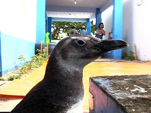 Pinguins são liberados em praia de Iriri, no Norte do ES  (Foto: Reprodução/TV Gazeta Norte)