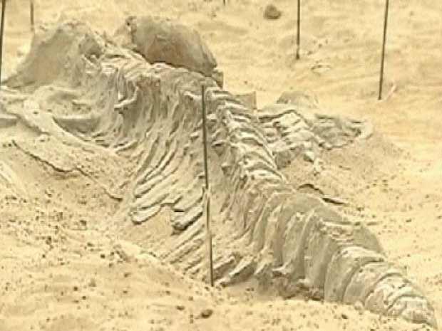 Paleontólogos acham cemitério de baleias pré-históricas no Chile (Foto: BBC)