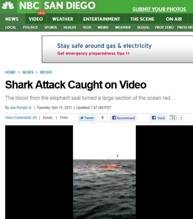 Sangue nas águas é visto em meio aos botes do tubarão no vídeo feito pelos turistas (Foto: Reprodução/NBC San Diego)