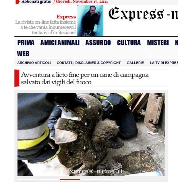 Cão precisou ser resgatado após ficar com a cabeça presa em uma roda. (Foto: Reprodução)