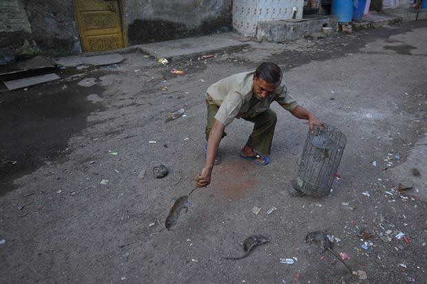 Caçadores caçam, pelo menos, 30 ratos por noite. (Foto: Danish Siddiqui/Reuters)