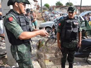 PM Ambiental apreende mais de 70 aves em feiras da Paraíba (Foto: Walter Paparazzo/G1)