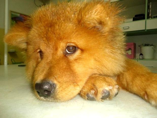 Cães em estado extremo de abandono são resgatados pela Polícia (Foto: Divulgação/ONG Bichos Carentes)