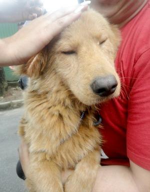 Cachorro recebe carinho ao ser resgatado (Foto: Divulgação/ONG Bichos Carentes)