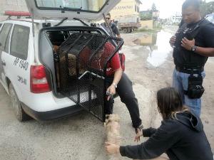 Cães em estado de abandono são resgatados pela polícia, no ES (Foto: Divulgação/ONG Bichos Carentes)