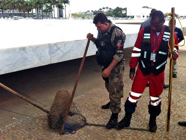 Seguranças imobilizam com rede capivara que apareceu sob a rampa de entrada do Supremo Tribunal Federal, em Brasília, na tarde desta terça-feira (22) (Foto: Débora Santos/G1)