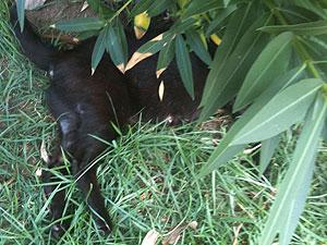 Moradores vão à polícia denunciar morte de 15 gatos por envenenamento (Foto: Márcio Vinhas Barretto/Arquivo Pessoal)