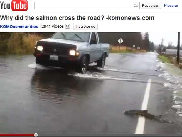 Peixes são flagrados atravessando rodovia inundada nos EUA (Foto: Reprodução de vídeo)