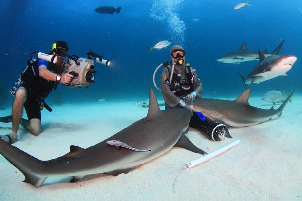 A italiana chega a imobilizar dois tubarões por vez (Foto: Marcio Lisa/Txai)
