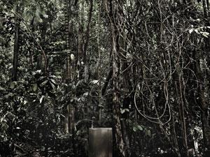 Natureza, do grupo 'Cia da Foto' (Foto: Divulgação)