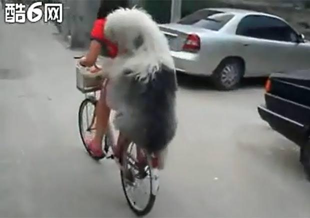 Cão anda na garupa da bicicleta de sua dona na China. (Foto: Reprodução/YouTube)
