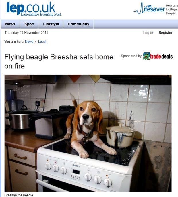 'Breesha' provocou um incêndio que quase destruiu a casa de seus donos. (Foto: Reprodução)