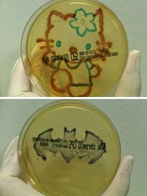 Desenhos de Hello Kitty e do símbolo do Batman feito por professora com cultivo de bactérias (Foto:  Fabíola Castro/Arquivo pessoal)