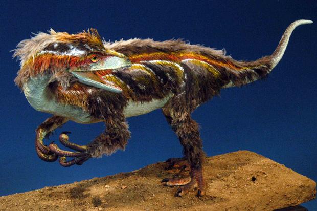 O Pampadromaeus barberenai é reproduzido acima, com penas e 1,2 m de altura. (Foto: Gabriel de Mello / Ulbra / Divulgação)