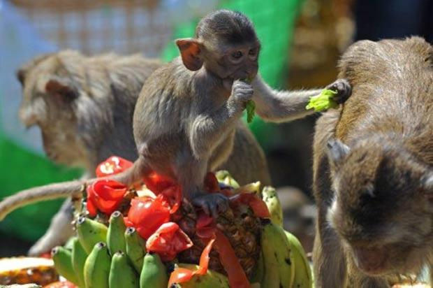 Macacos participam de banquete em antigo templo na província de Lopburi. (Foto: Pornchai Kittiwongsakul/AFP)