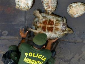Operação combate a fiscalização irregular de peixes e quelônios (Foto: arquivo/Polícial Ambiental do Amazonas)