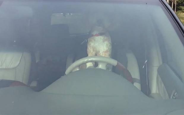 Cão foi filmado apertando a buzina e latindo para atrair a atenção de seus proprietários. (Foto: Reprodução/YouTube)