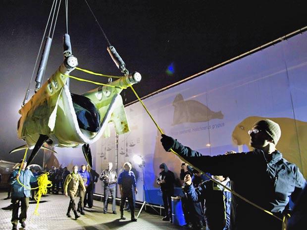A orca Morgan é transferido para a Espanha (Foto: Marco Hofste/Dolfinarium/AP)