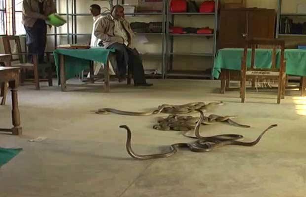 Funcionários e moradores protegem-se do ataque de cobras em Basti nesta terça-feira (29) (Foto: AP)