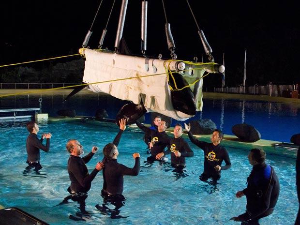 Tratadores auxiliam a orca Morgan a entrar em piscina do Loro Parque, nas Ilhas Canárias, na Espanha (Foto: Loro Parque/AP)