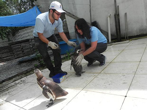 Ipram precisa de uma nova estrutura física para continuar o tratamento dos pinguins no ES  (Foto: Amanda Monteiro/G1 ES)