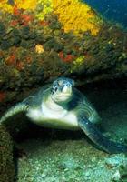 Arraial do Cabo tem mar azul e mergulho (Divulgação/ PL Divers)