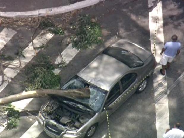 Galho de árvore atingiu veículo na Avenida Giovanni Gronchi, no Morumbi (Foto: Reprodução/TV Globo)