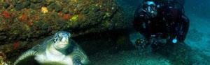 Arraial do Cabo é o 'Caribe' do Rio de Janeiro (Divulgação/ PL Divers)