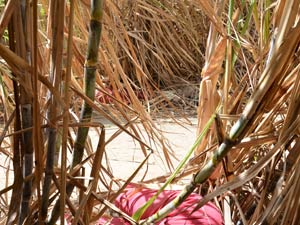 The body of one of the three Finns found dead in a sugarcane field last Friday in Paraiba, Brazil