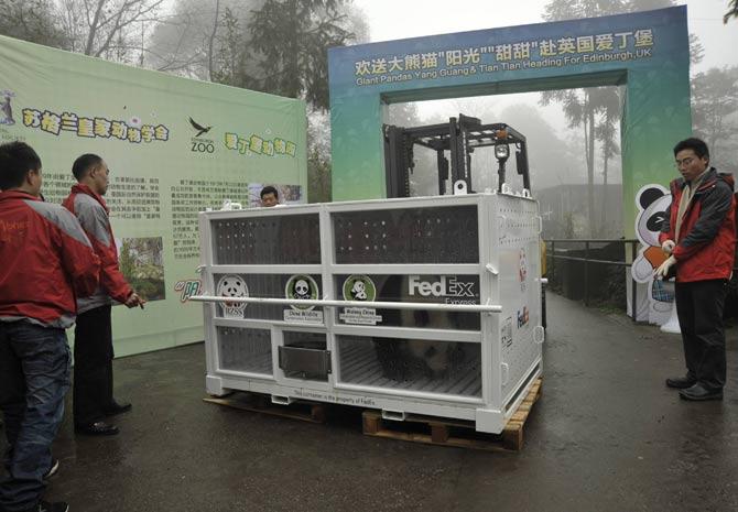 Funcionários do centro de tratamento chinês começaram a trabalhar no embarque dos pandas neste sábado (3) (Foto: Reuters/China Daily)