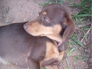 A Aspaan incentiva a adoção de animais abandonados. (Foto: Assessoria de Imprensa / Aspaan)