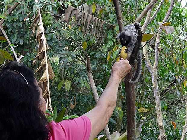Sítio Pedra Solta - Serra Negra - Bezerros - PE (Foto: Luna Markman / G1)