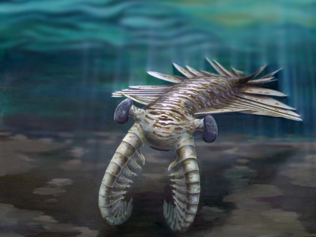 Ilustração de como seria o 'Anomalocaris' (Foto: Katrina Kenny / University of Adelaide)