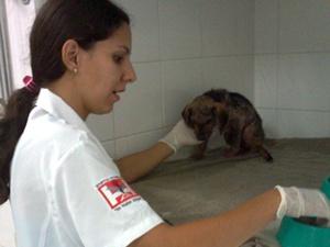 Filhote é resgatado após passar 12h enterrado vivo em Novo Horizonte, SP (Foto: Rodrigo Mansil / TV Tem)