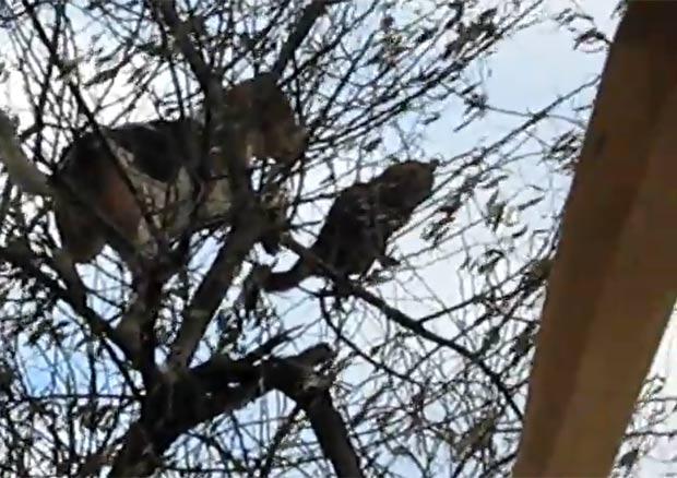 Cachorro perseguiu gato e subiu na árvore. (Foto: Reprodução/YouTube)