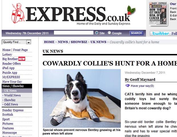 'Bentley' ganhou o título de cão mais medroso do Reino Unido. (Foto: Reprodução/Express)