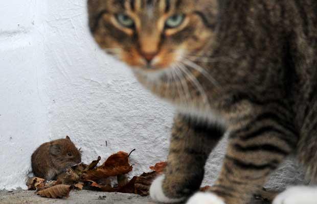 Gato é flagrado brincando com presa na Alemanha (Foto: Julian Stratenschulte/AFP)