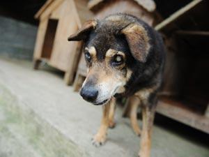 Cães abandonados são geralmente resgatados desnutridos e após maus-tratos (Foto: Raul Zito/G1)