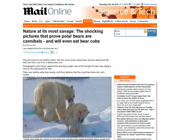 Fotografia feita por Jenny Ross enviada ao jornal Daily Mail mostra o canibalismo entre ursos polares (Foto: Reprodução/Daily Mail)