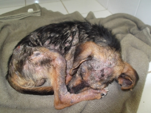 Filhote de vira-lata está debilitado e recebe atenção especial  (Foto: Divulgação)
