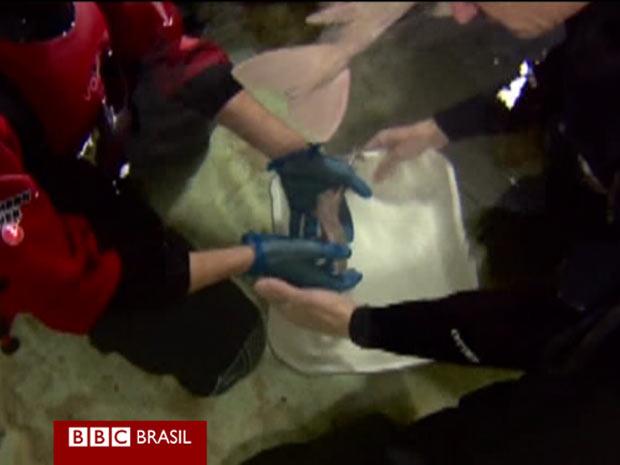 Filhotes de tubarão (Foto: Reprodução/BBC)
