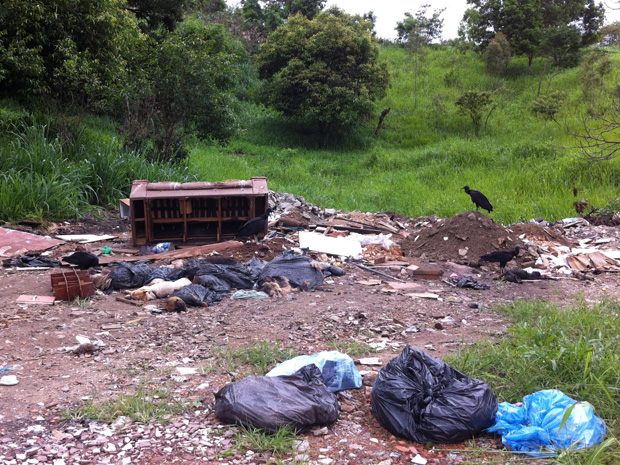 Moradores de Novo Horizonte encontraram 28 cachorros mortos, dentro de sacos de lixos, jogados em um terreno baldio (Foto: Tatiane Braga/ TV Gazeta)