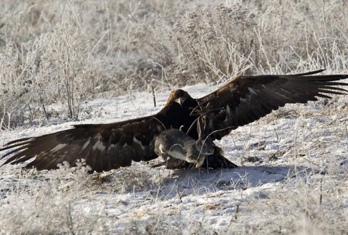 águia 1 (Foto: Shamil Zhumatov/Reuters)
