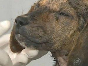 Titã recebe banho terapêutico e vitaminas. (Foto: Reprodução/TV Tem)