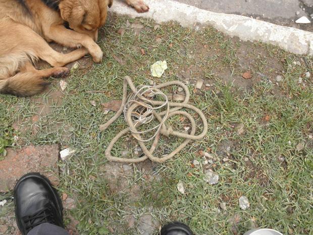 Homem amarrou animal ao para-choque do veículo com uma corda (Foto: Divulgação/ Polícia Militar)