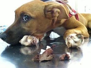 Cão espancado em Tanabi, SP, passa por cirurgia na mandíbula (Foto: Divulgação / Adalberto Amaral)