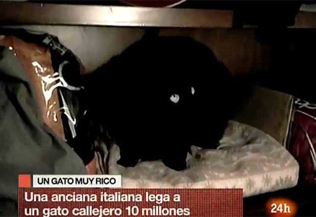 Gato herdou uma fortuna de 10 milhões de euros. (Foto: Reprodução)